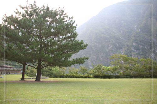 061布洛灣大樹.JPG