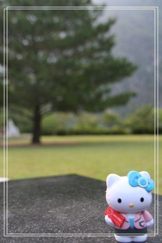 064KT布洛灣大樹.JPG