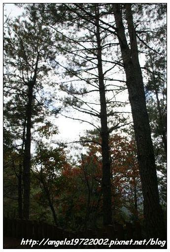 093樹木.JPG