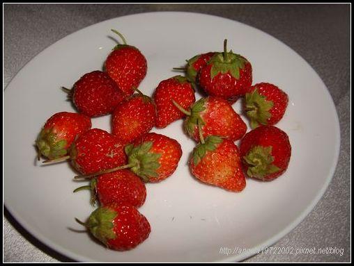 31草莓.JPG
