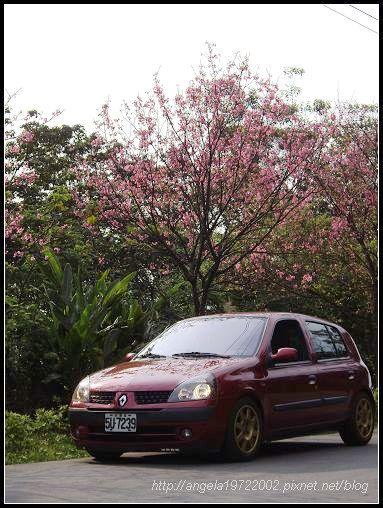 11小紅與櫻花.jpg