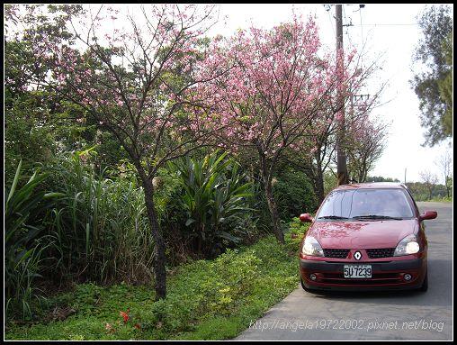 12小紅與櫻花.jpg