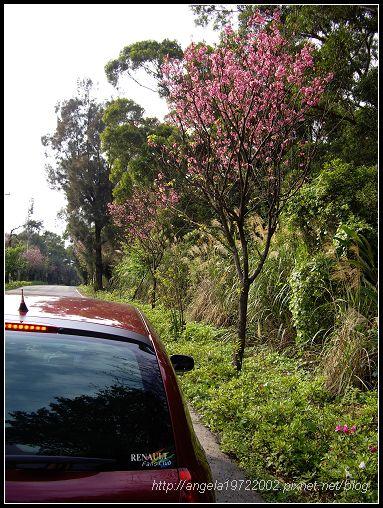 13小紅與櫻花.jpg