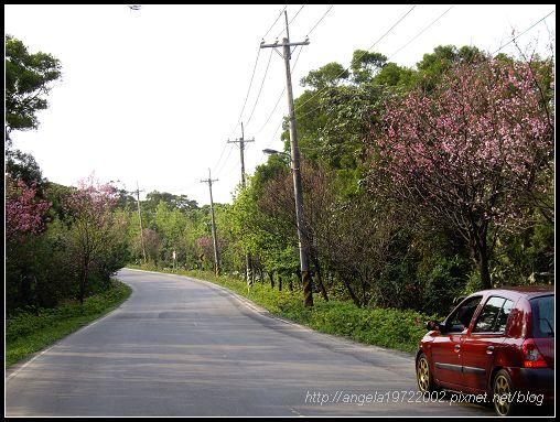22小紅與櫻花.jpg