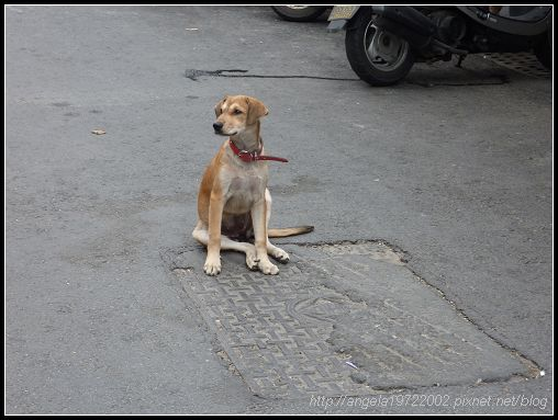 149坐在路中間的狗.jpg