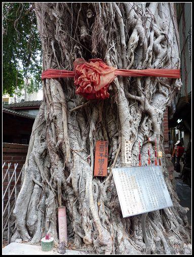 157三百年樹王公.jpg