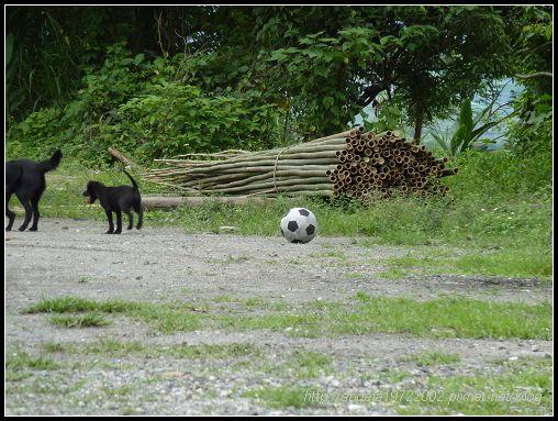 464玩足球的狗狗.jpg