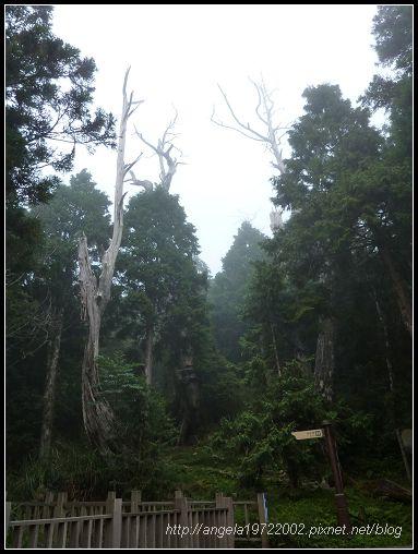 59山林.jpg