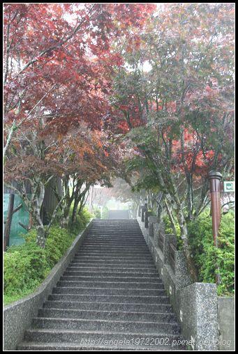 15霧茫茫的紫葉槭步道(hua).jpg