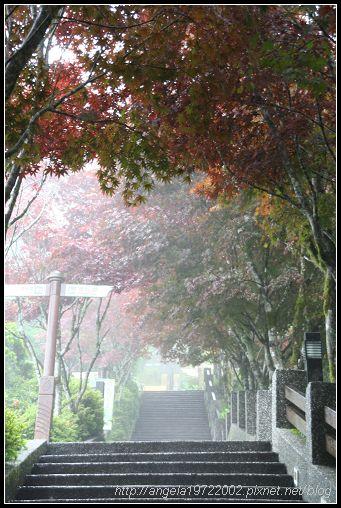 18霧茫茫的紫葉槭步道(hua).jpg
