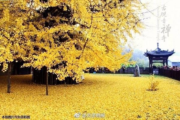 樹A.jpg