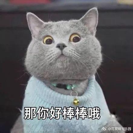 貓D.jpg