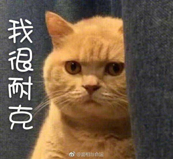 貓B.jpg
