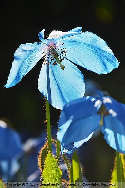 花I.jpg