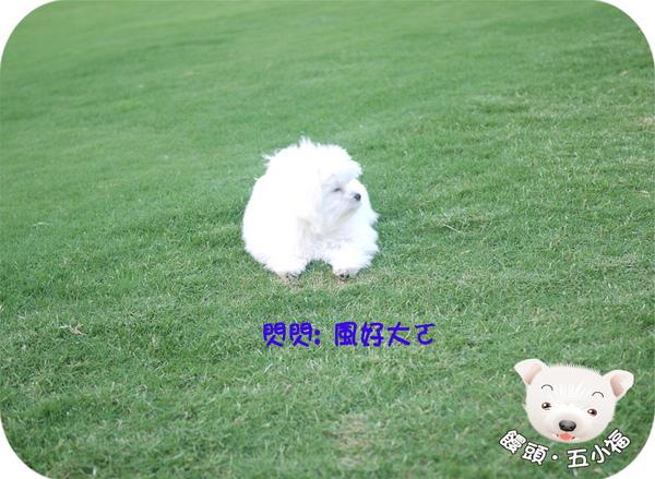 閃閃-3.jpg