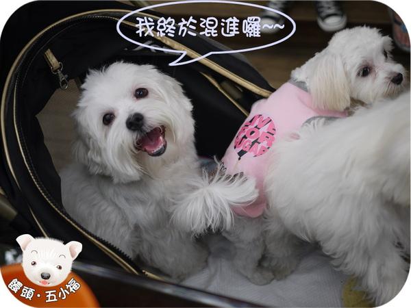 旺旺-1.jpg