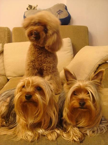 三隻狗寶貝