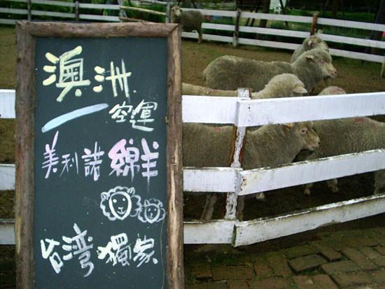 澳洲空運美利諾綿羊
