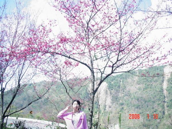 難得看到山櫻花一定要拍一下