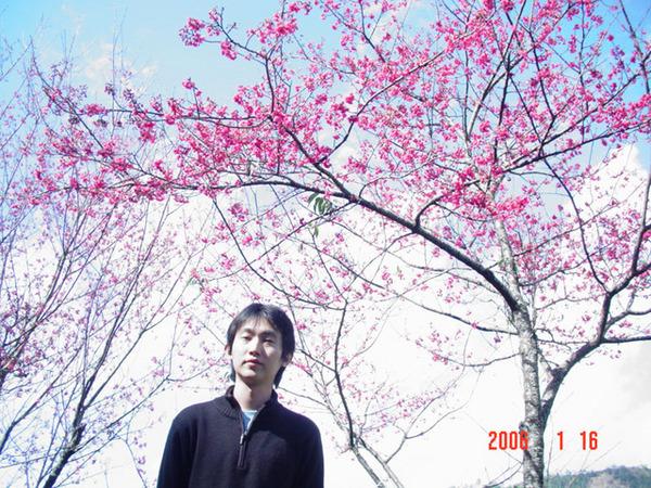 小佑跟山櫻花