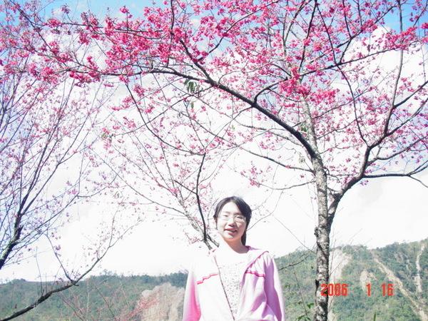 天氣好山櫻花感覺更美了