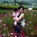 站在波斯菊叢裡面.好多花喔
