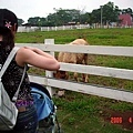 農場裡面有養馬