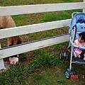 柔柔第一次看到馬