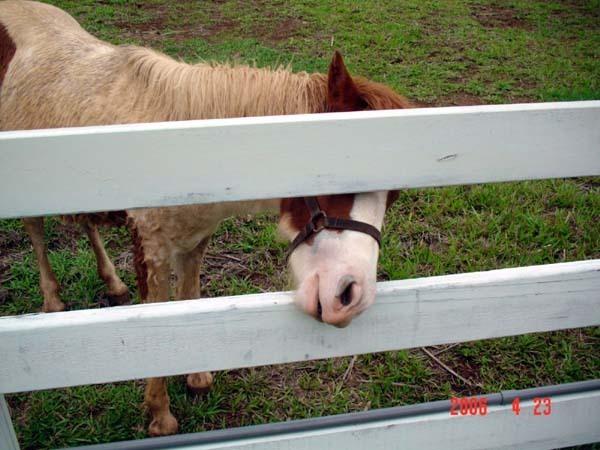 關在柵欄裡的馬先生