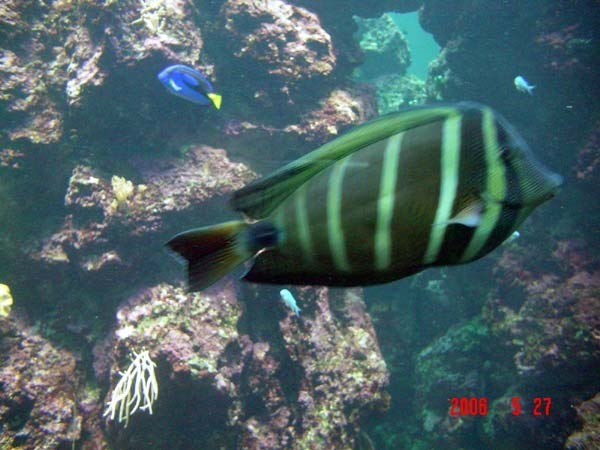 海生館裡的魚