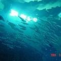 海底隧道裡的魚群