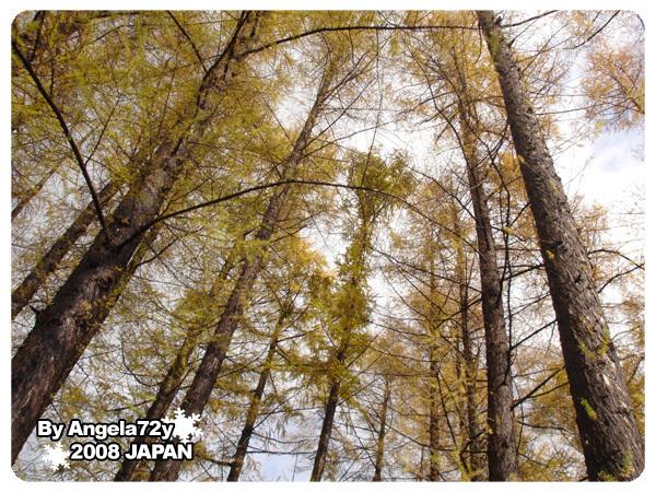 20081101_54.jpg