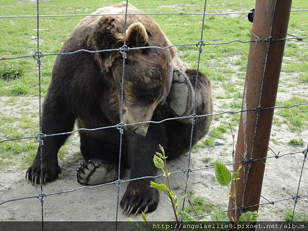 Alaska Wildlife Conservation Centre