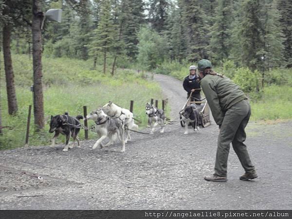 Dog Sled Kennels