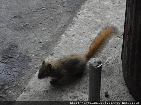 Squirrel in Denali NP