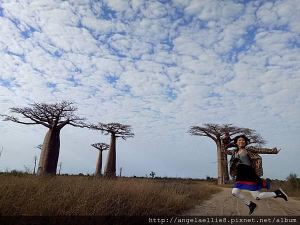 Baobabs jump