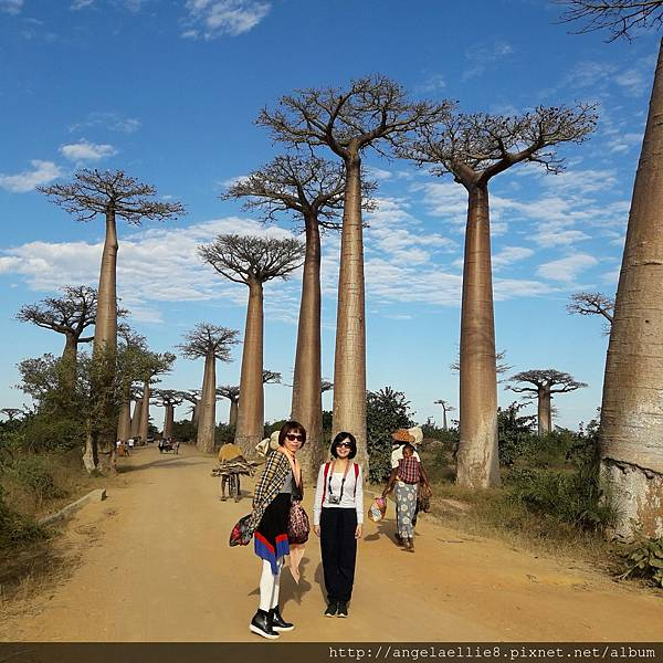馬達Baobabs avenue