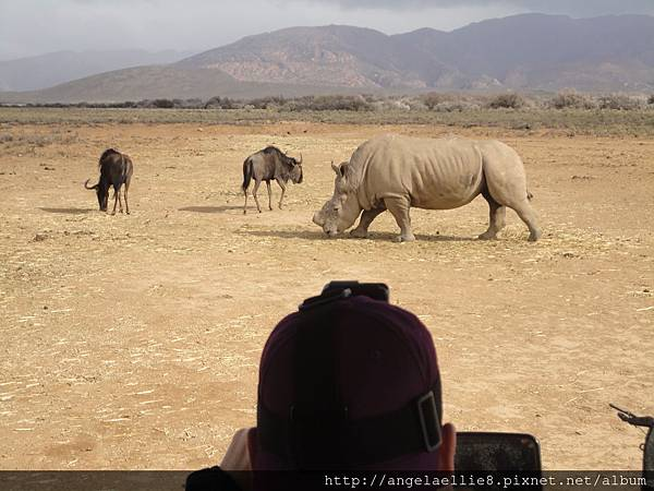 20170709 Big 5 Safari Day Tour