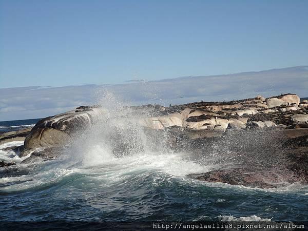 Seal Island Cape Town