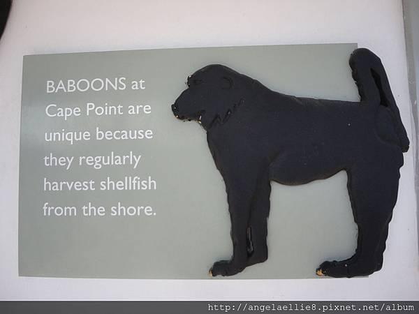baboon info