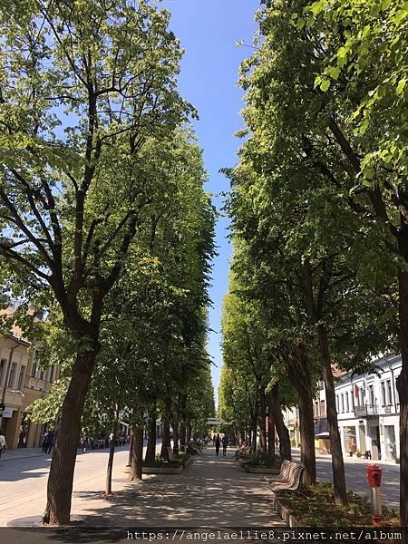 Kaunas Laisvės Alėja