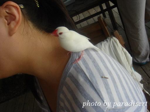 小鳥就ㄘㄨㄚˋ塞了...