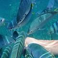 魚群狂咬區PART II