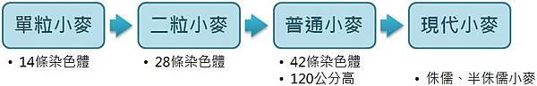 小麥演變史.jpg
