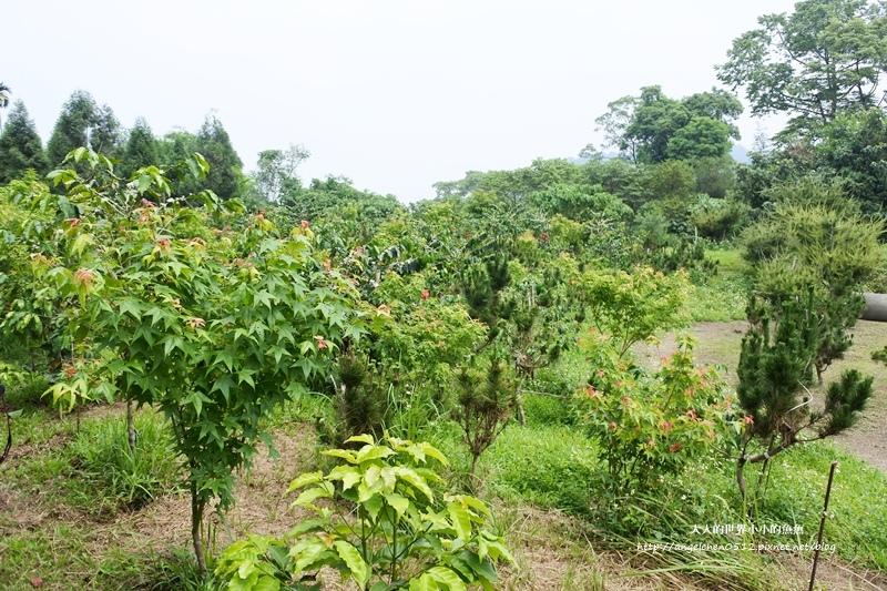 雲林景點 古坑景點 谷泉咖啡莊園的王建民  台灣咖啡的歷史  古坑咖啡深度導覽4