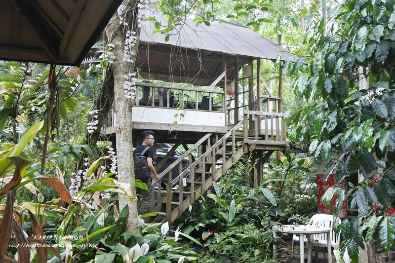 雲林景點 古坑景點 古坑美食 竽芯園庭園咖啡9