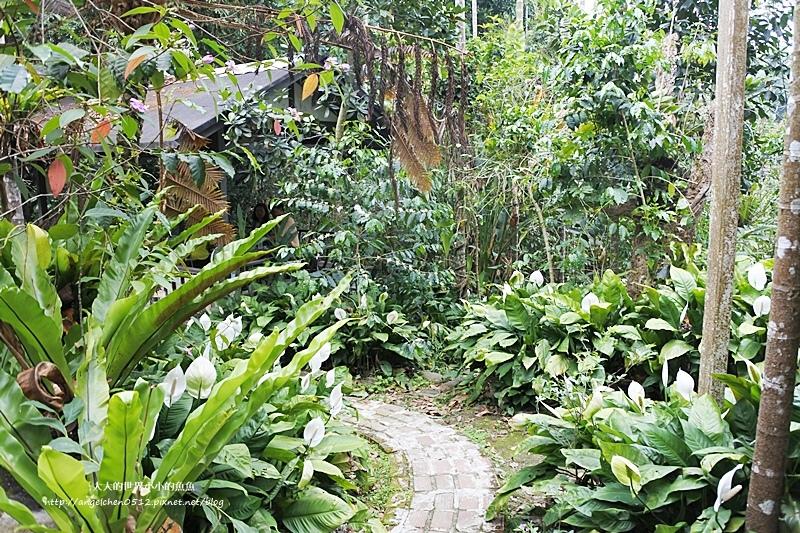 雲林景點 古坑景點 古坑美食 竽芯園庭園咖啡5