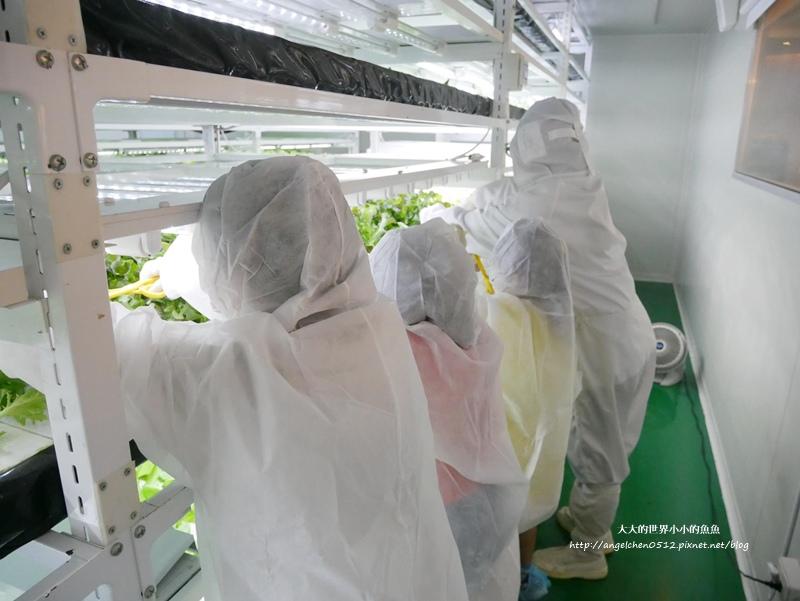 NICE GREEn 美蔬菜廚房 小小科技農夫  親子體驗營10