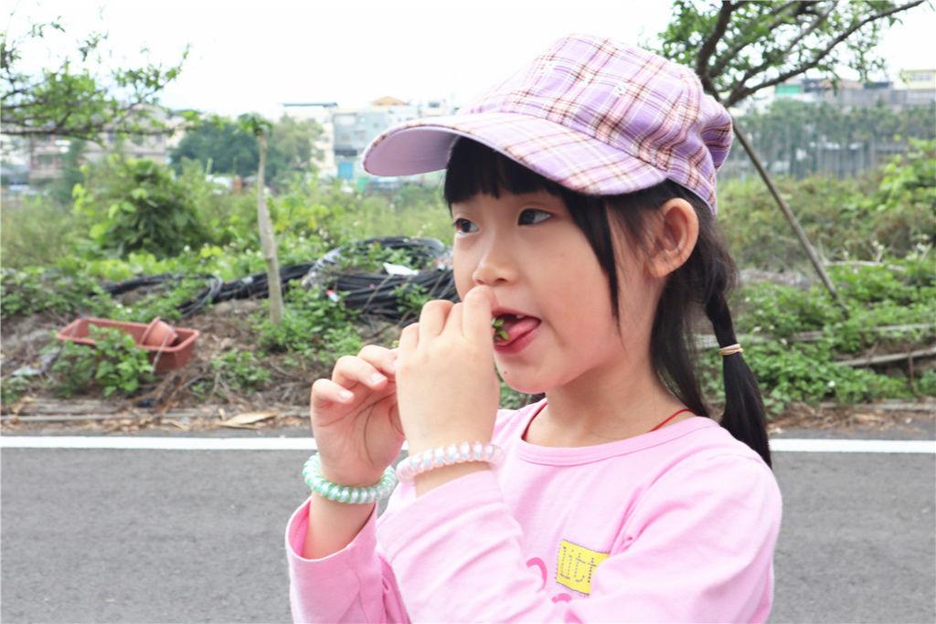 苗栗莓樂地草莓園苗栗 大湖草莓13.jpg