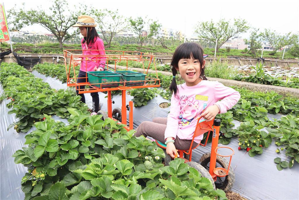 苗栗莓樂地草莓園苗栗 大湖草莓32.jpg